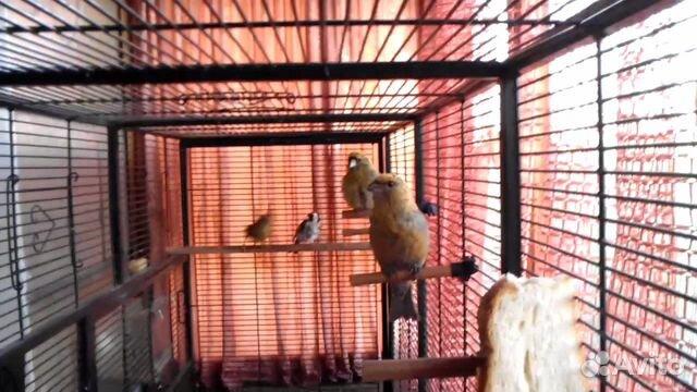 Вольер для птицы видео