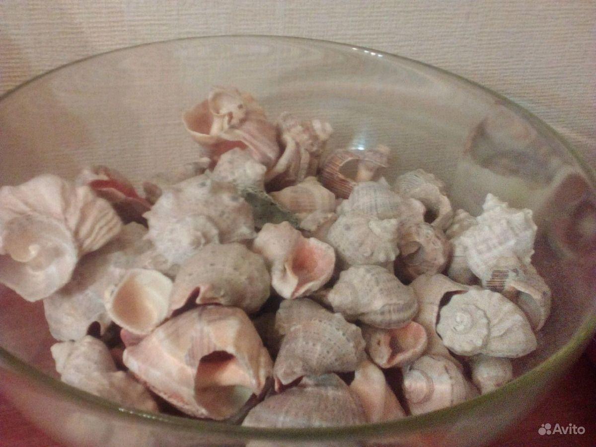 Ракушки рапаны раковины с Чёрного моря купить на Зозу.ру - фотография № 7