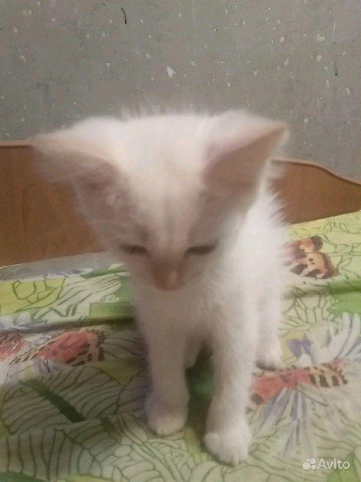 Котята 2 месяца отдадим бесплатно в добрые руки в Барнауле - фотография № 3
