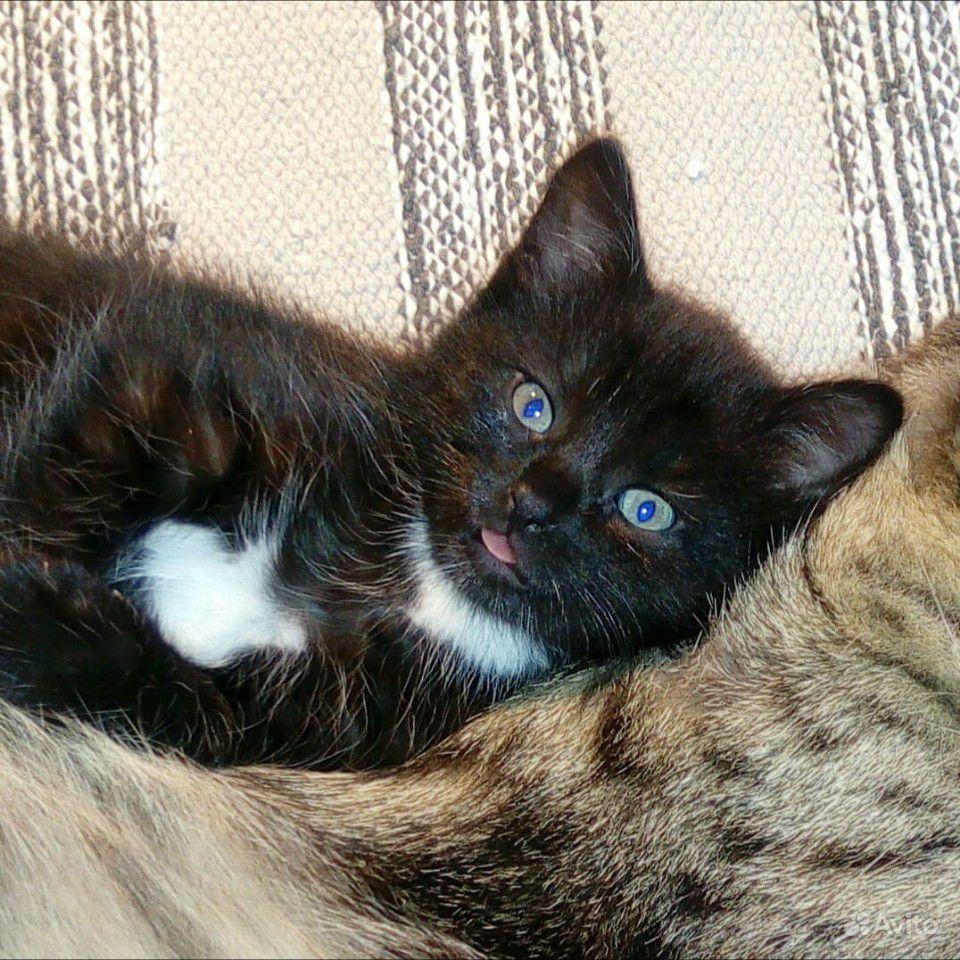 Котёнок. Мама мышеловка