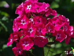 Многолетние и комнатные цветы