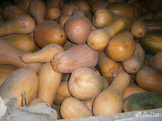 Купить тыкву в волгоградской области