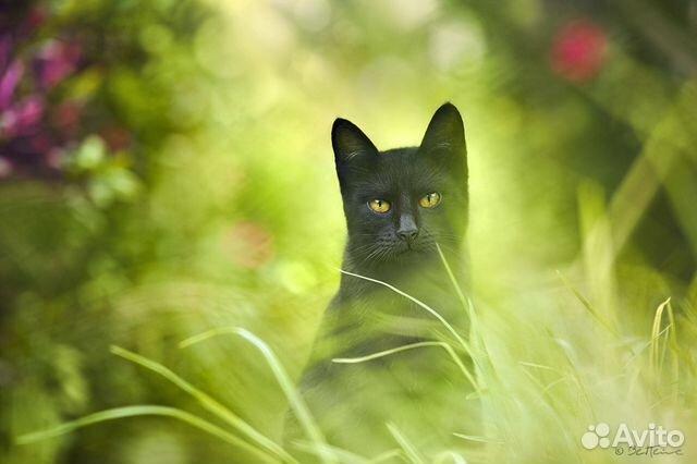 Великолепные черные коты ищут дом