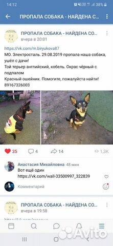 Пропала собака купить на Зозу.ру - фотография № 2