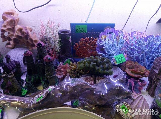 Decorations for aquarium 89081257208 buy 3