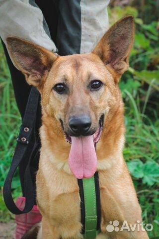 Собака ищет дом купить на Зозу.ру - фотография № 1
