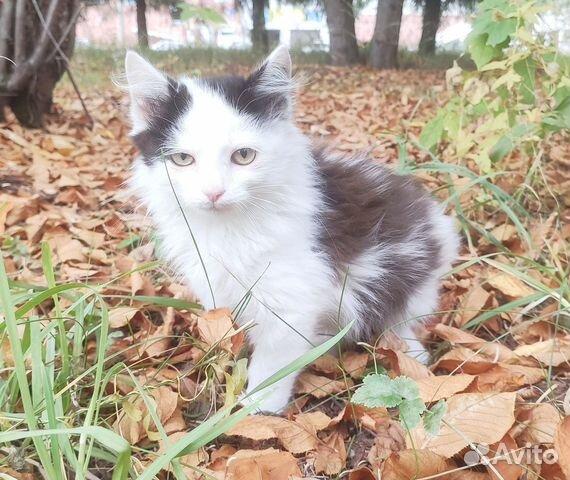 89137249811 Забавные котята ищут дом