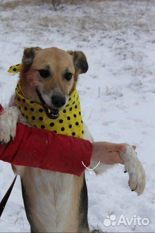 Собачка Мия в дар купить на Зозу.ру - фотография № 3