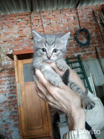 Отдам даром замечательных котят купить 4