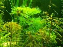 Аквариумные растения и всякая живность