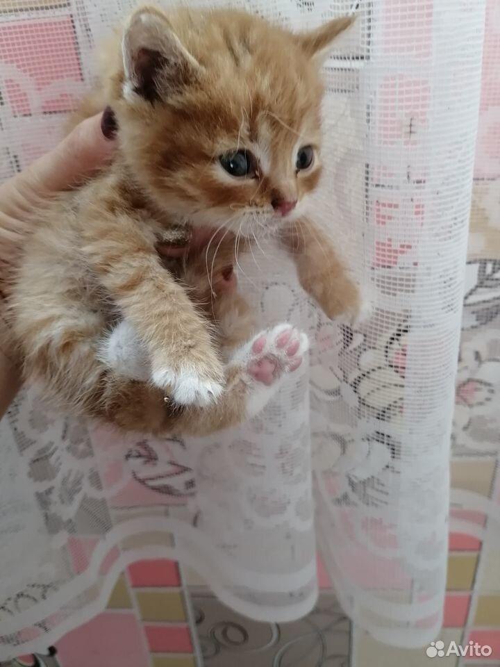 Kätzchen in gute Hände