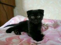 Котенок-девочка