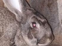 Крольчихи