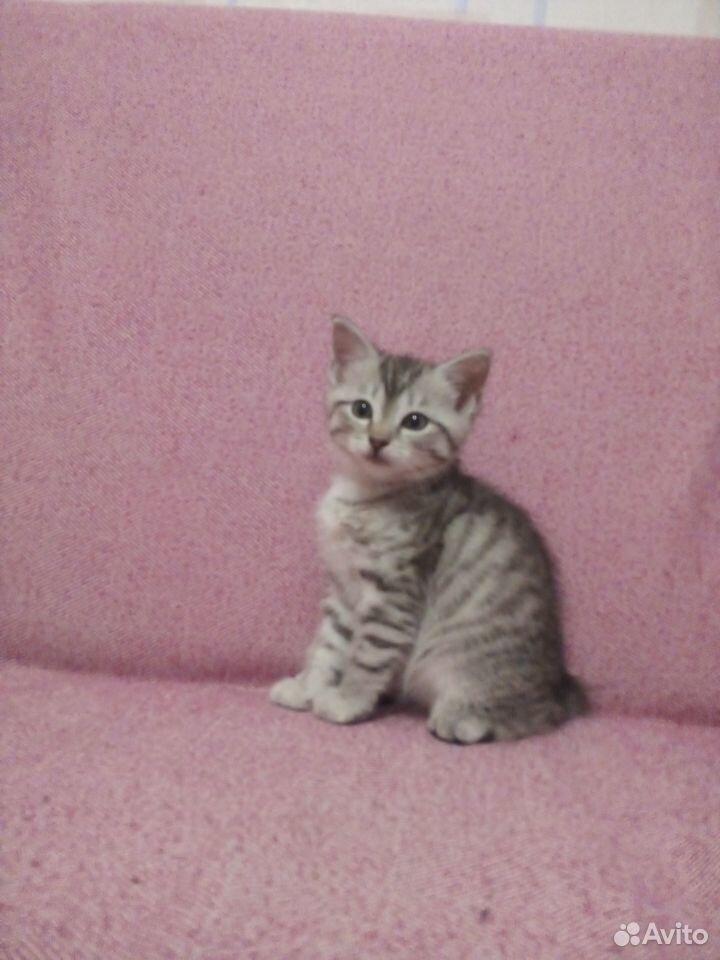 Отдам котят  89125546532 купить 3