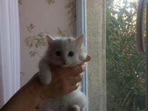 Отдам в добрые руки котенка Беллу — Кошки в Геленджике