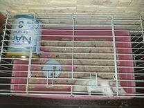 2 крысы с большой клеткой