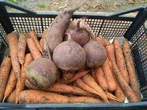Тыква, кабачки, свекла, морковь