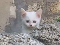 Отдам котят. Котик и вислоухая девочка