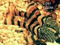 Номерные сомы L-397,L-028,L-046