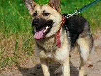 Жаклин-стерилизованная молодая собачка в добрые ру