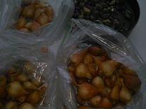 Луковицы тюльпанов, мускариков