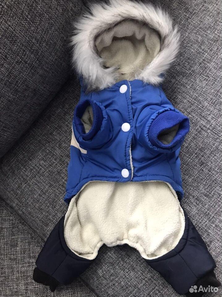 Одежда для собак  89137579987 купить 4