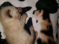 Отдам котят — Кошки в Геленджике