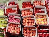Цветы розы эквадорские со склада в Спб