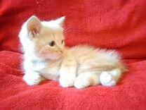 Голубоглазый мальчик 2 месяца